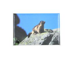 magnet-frigo-marmotte-rocher